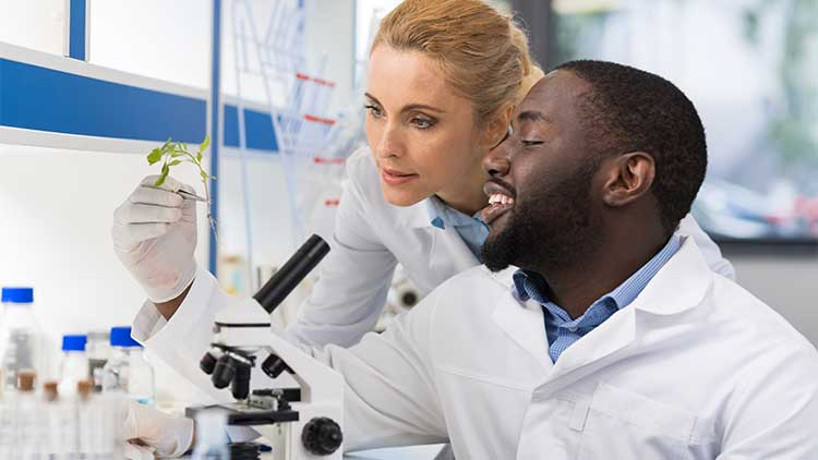 Scientists Looking At Sample Of Plant Working In Genetics Laboratory,