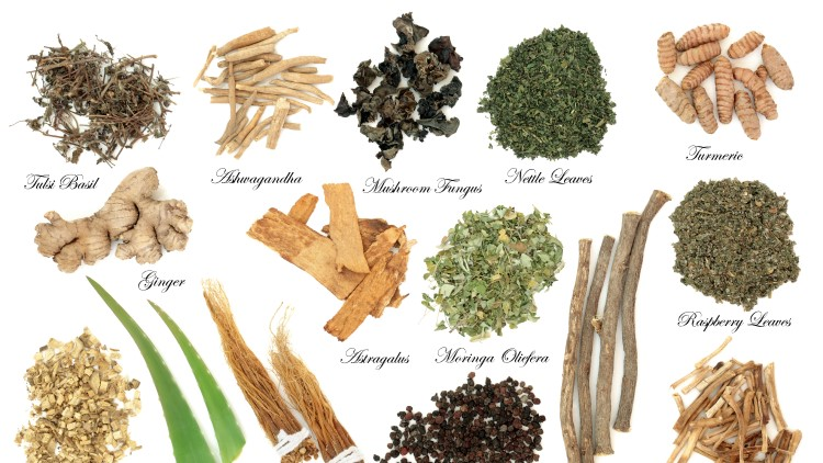 Adaptogen herb and spices