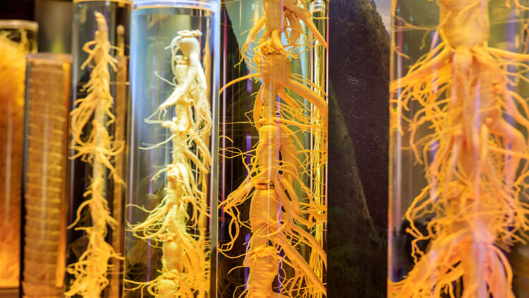 Ginseng Root in the glass jar