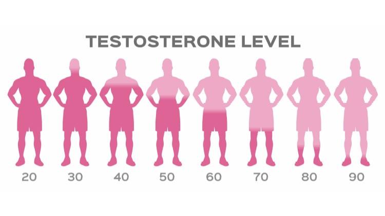 Testosterone levels inside silhouettes